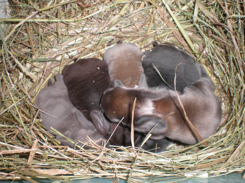 Почему самка кролика не хочет спариваться